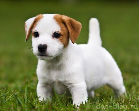 Гигиена щенок