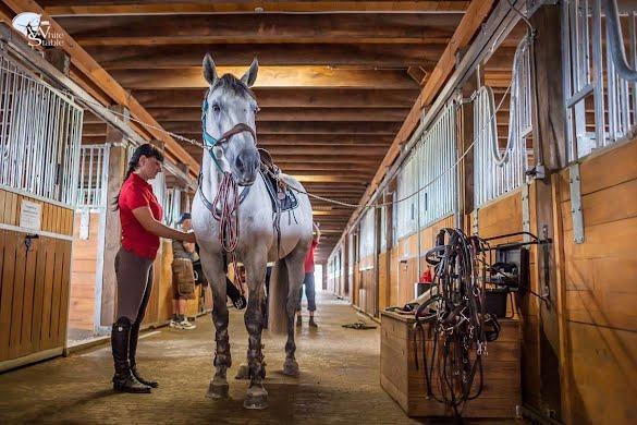 Уход и забота за лошадью